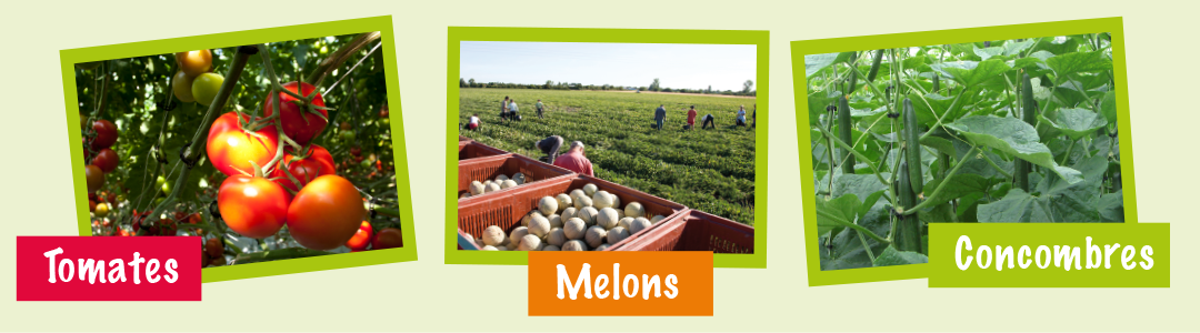 CHAMPSMERLE-Tomates-concombres-melons
